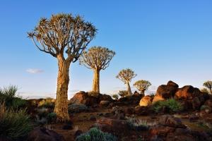IATUL Directors's Summit, Windhoek 2017, quiver trees